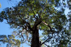 Karrak reach forest photos