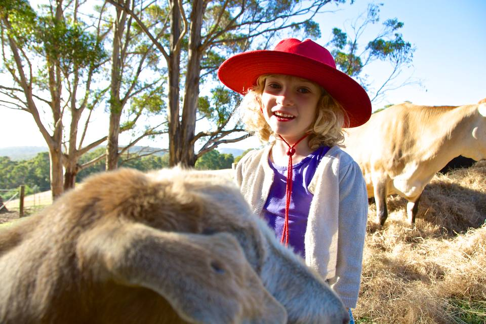 A young girl with a red hat smiling at the camera over the head of a sheep.