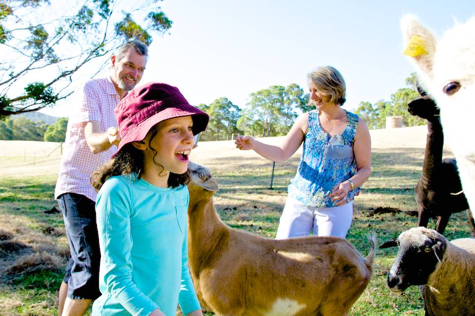 A girl with a delighted look on her face looking at an alpaca.