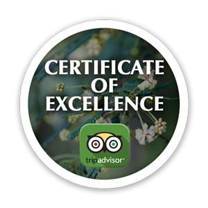 Certificate of excellence button